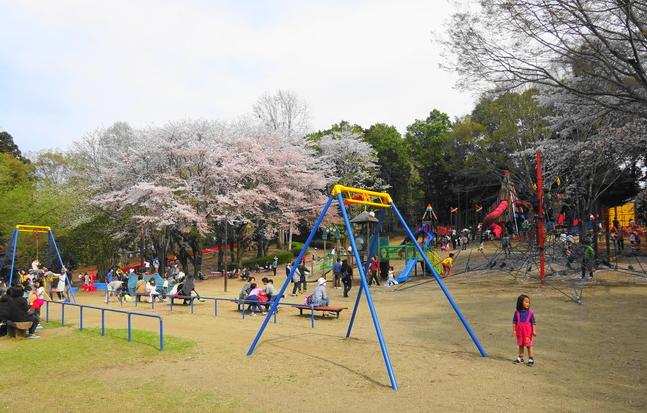 茨城桜の名所お花見スポット!子供と花見するなら千波公園が絶対オススメですよ! - いばらじお♪