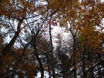 秋は紅葉がとても綺麗