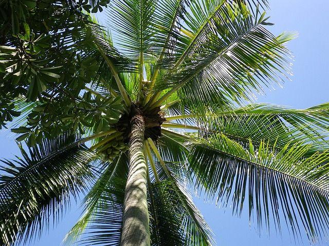 palm-1263272_640