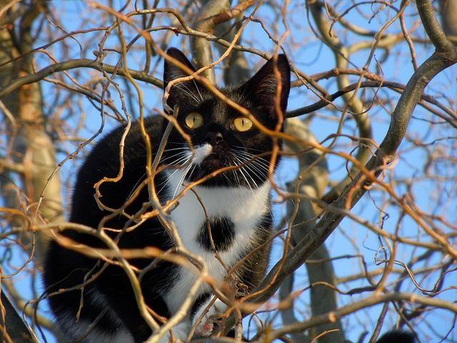 cat-93986_640