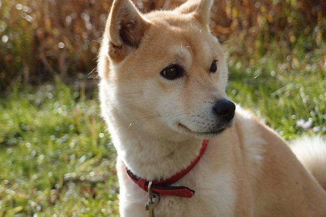 dog-1203347_640