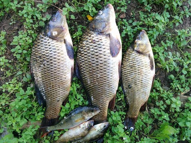 fish-1710231_640