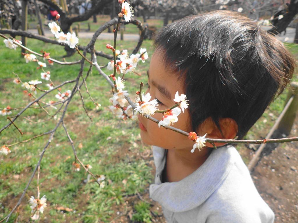 水戸梅まつり 2020 梅を楽しむ子供2