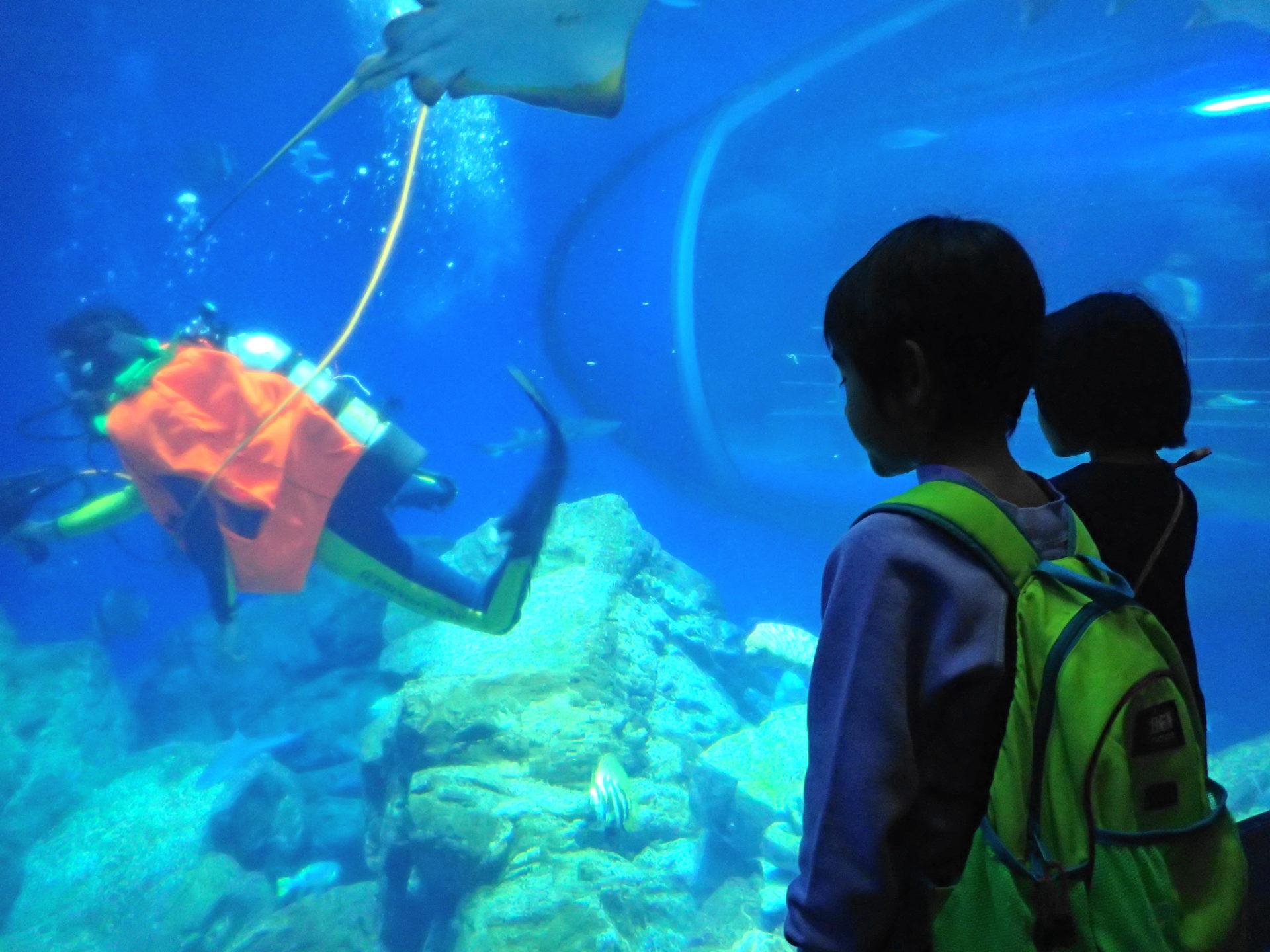 大洗水族館 |館内遊具とタッチングプールが雨でも楽しい!!割引情報も!!