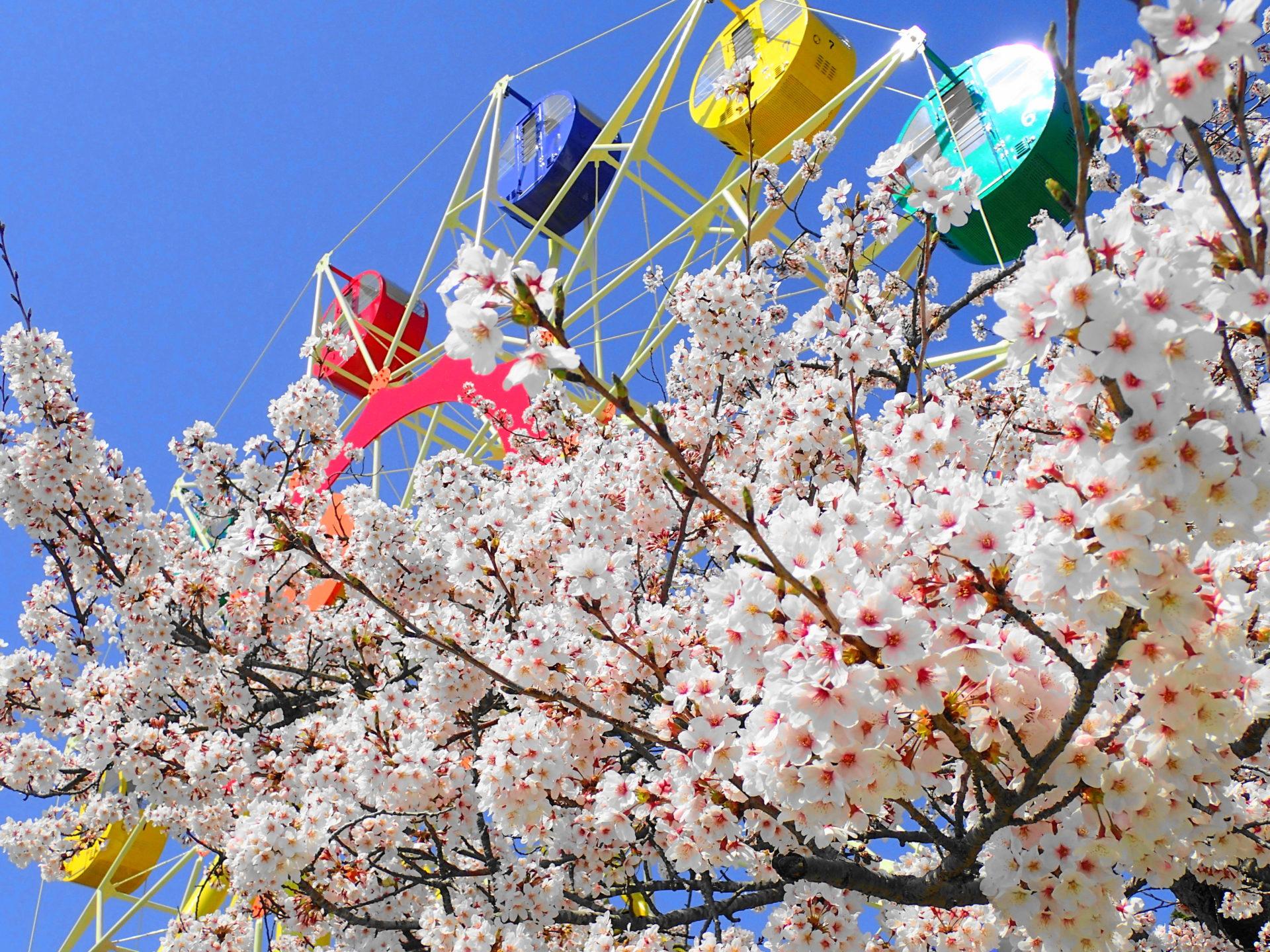 かみね動物園|茨城で桜を子供といっしょに見るならココ!撮影スポット5つを紹介するよ #Locketsリレー2018春 #桜 #地域ブログ - いばらじお♪
